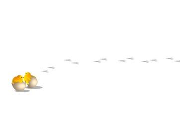 pulcini e nascita