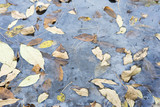 Dried leaves in frozen water.