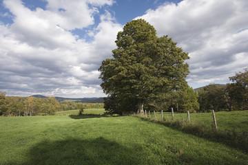 Trees on vast grassland.