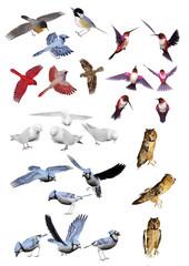 Misto Uccelli