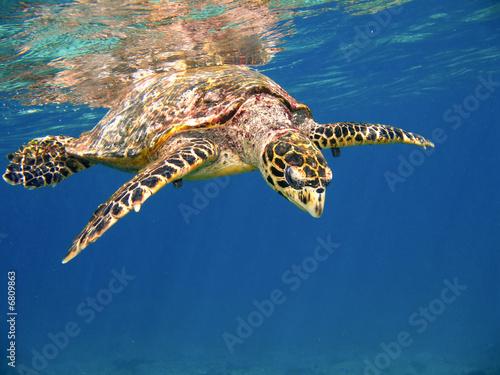 Fotobehang Schildpad Sea turtle