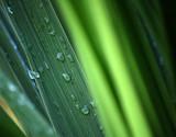 Rainwater on leaf poster