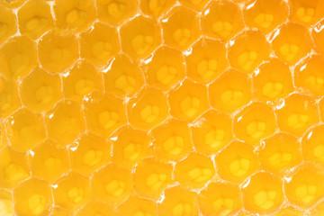 Honeycomb close-up
