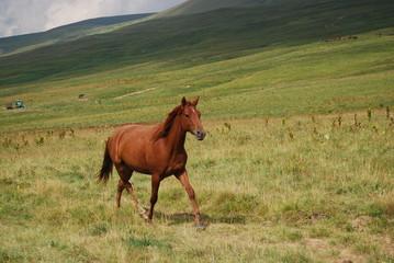 horse runs home