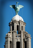 royal liverbird, liverpool