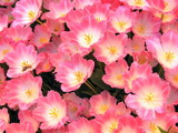 Botanical Garden: Spring Flower Background poster