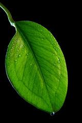 Glossy green sheet