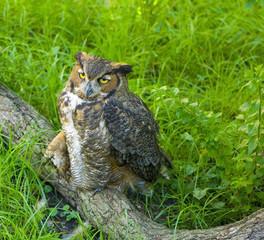 sad looking owl