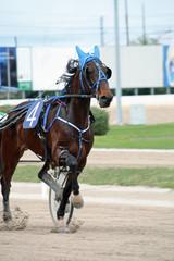 an horse race in Italy
