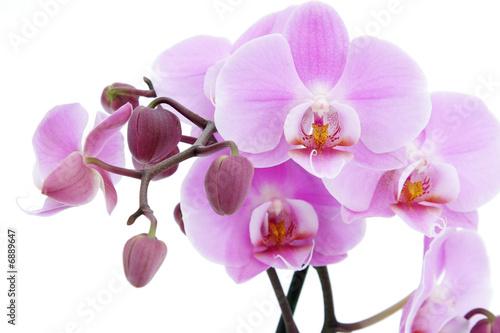 kwiat-fioletowej-orchidei