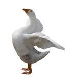 Proud Goose poster