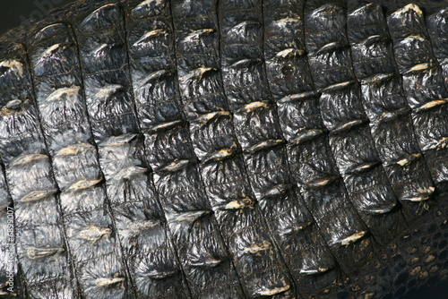 alligator scales