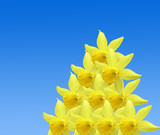 Repetitive daffodil pattern poster
