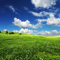 Field an clouds
