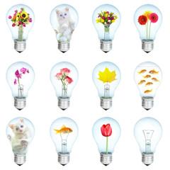 Twelve electric bulbs