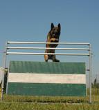 jumping shepherd poster