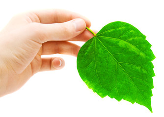 human hand and green leave on white