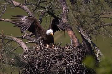 Landing on the Nest