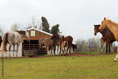 Horses grazing at a horse farm.
