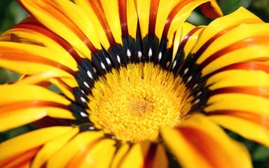 Detalle de flor naranja y amarilla