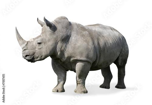 Staande foto Neushoorn Rhinoceros