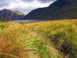 County Sligo Summer