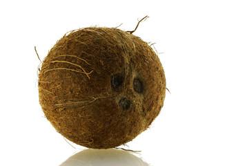 close up shot of fresh single coconut