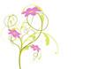 Detaily fotografie vektor série - květy v létě nebo na jaře