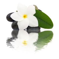 fleur frangipanier esprit zen