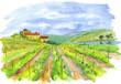 vineyard - 7018870