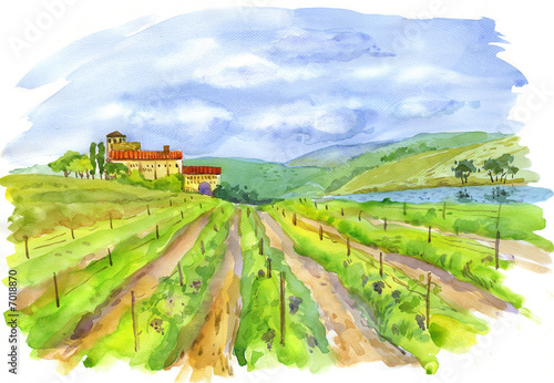 Leinwandbild Motiv vineyard