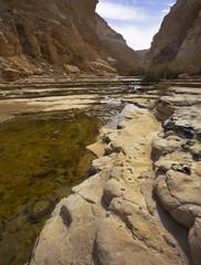 Rotten bog in deserts.