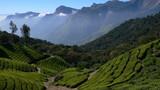 plantations de thé, Kerala - Inde - 7036437