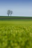 pré champs arbre campagne culture agriculture vert nature poster