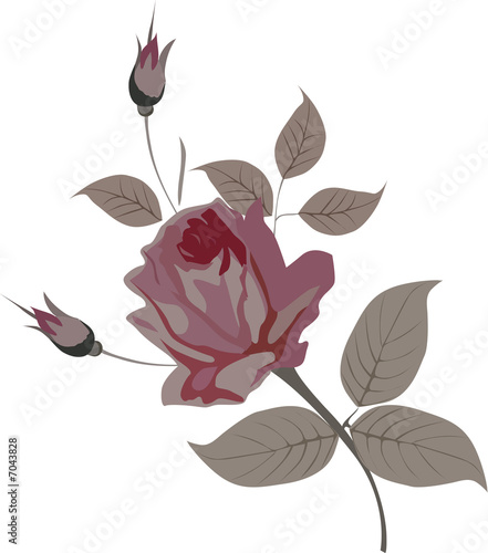 illustration with pink rose
