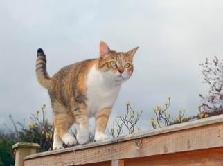 Alert cat on fence