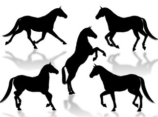 Cavalli in silhouettes
