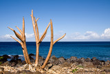 Bare tree limbs by the ocean poster