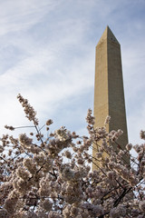 Washington Monument underpinned with Cherry Blossoms