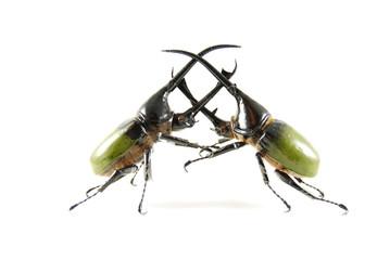 neptune beetle vs neptune beetle 2