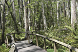 lush tropical forest path poster