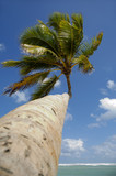 Palm at exotic beach in caribbean poster