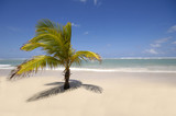 Caribbean beach with palm and white sand poster