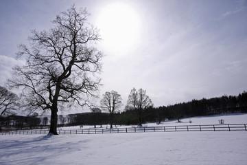 Snow scene in Aberdeenshire