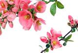 cornice di fiori poster