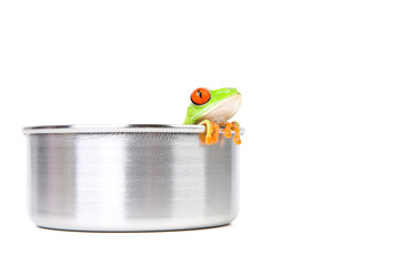frog in cooking pot isolated on white