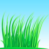 Wisp of lush grass. poster