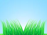 Wisps of lush grass. poster
