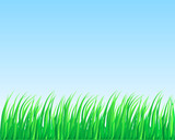 Lush grass. poster