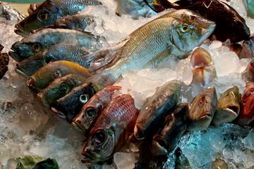 fish,  ice